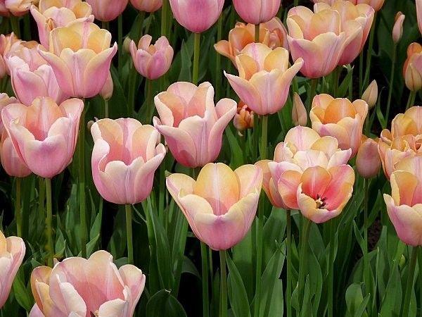 """ma fleurs préféré """""""